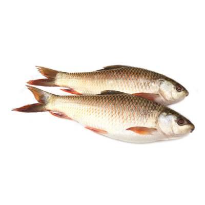 Rohu Balık